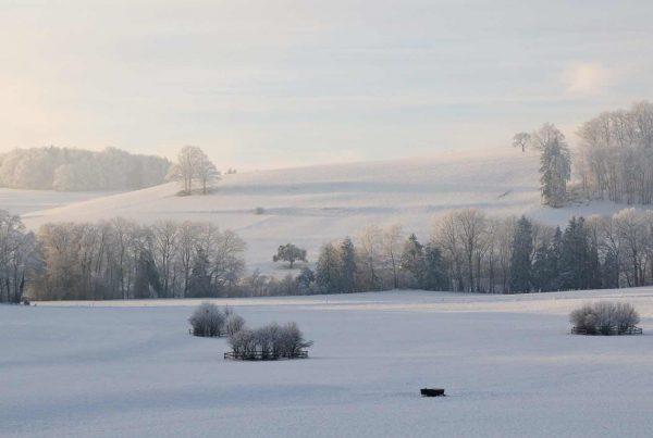 Feld im Winter
